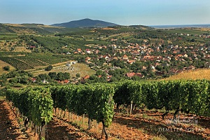 round trip in hungary tokaj wine region